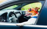 Consigli per portare il cane in viaggio e in vacanza