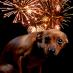 La paura dei fuochi d'artificio dei cani